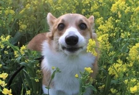 お花畑で犬と散歩